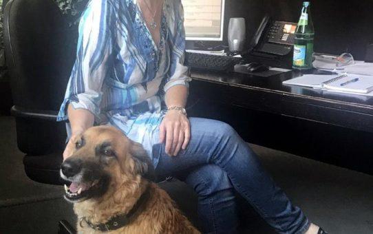 Tierischer Besuch bei Weber Data Service - Aktionstag Kollege Hund